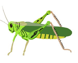 What do grasshoppers do all day?
